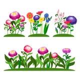 De tuin bloeit vectorsamenstelling Pioen, lilly, madeliefje met groene bladeren vector illustratie