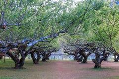 De tuin en het gras van de pruimtunnel Royalty-vrije Stock Afbeelding