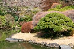 De tuin Koishikawa van de plantkunde in Tokyo Royalty-vrije Stock Foto's