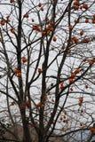 De tuin met de dadelpruimboom die wordt gevuld Royalty-vrije Stock Foto