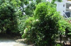 De tuin met diverse types van bomen en bloeit ook stock fotografie