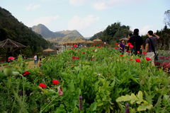 De tuin Thailand van ANG khang Royalty-vrije Stock Afbeeldingen