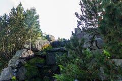 De tuin van aardbloemen Royalty-vrije Stock Foto's