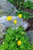 De tuin van aardbloemen Royalty-vrije Stock Foto