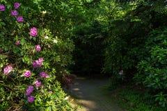 De tuin van aardbloemen Stock Foto