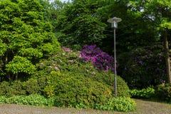 De tuin van aardbloemen Stock Afbeeldingen