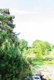 De tuin van aardbloemen Royalty-vrije Stock Afbeeldingen