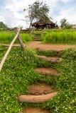 De tuin van de de bergbloem van Mon Chaem in Chiang Mai, Thailand Royalty-vrije Stock Fotografie