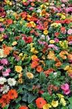 De tuin van bloemen Stock Afbeeldingen