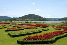 De Tuin van bloemen Royalty-vrije Stock Foto's