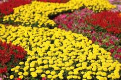 De Tuin van bloemen Stock Afbeelding