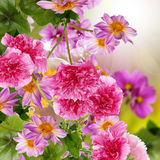 De tuin van bloemen Stock Foto's