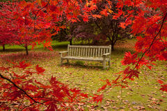 De tuin van Bodnant in de Herfst Stock Fotografie