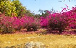 De Tuin van Boedha, New Delhi Royalty-vrije Stock Afbeeldingen