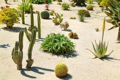 De tuin van Cactoo Stock Afbeeldingen