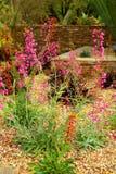 De tuin van Cactoo Stock Afbeelding
