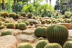 De tuin van Cactoo Stock Foto