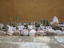 De tuin van Cactoo Royalty-vrije Stock Afbeelding