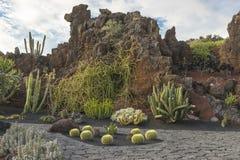 De tuin van de cactus in lanzarote royalty-vrije stock fotografie