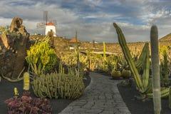 De tuin van de cactus in lanzarote stock foto's