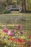 De tuin van de Aanplanting van de magnolia stock foto