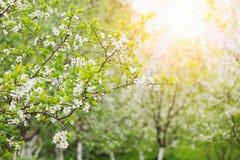 De tuin van de appel Royalty-vrije Stock Afbeeldingen