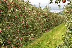De tuin van de appel Royalty-vrije Stock Afbeelding