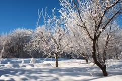 De tuin van de appel in de winter Royalty-vrije Stock Foto's