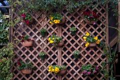 De tuin van de binnenplaats Stock Afbeeldingen