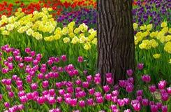 De tuin van de bloem Stock Foto's