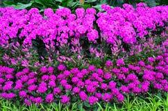 De tuin van de bloem Royalty-vrije Stock Fotografie
