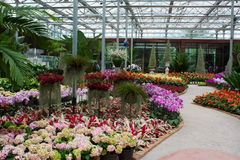 De tuin van de bloem Stock Afbeeldingen