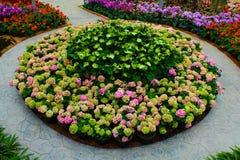 De tuin van de bloem Stock Foto