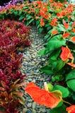 De tuin van de bloem Stock Fotografie