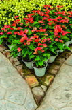 De tuin van de bloem Royalty-vrije Stock Foto