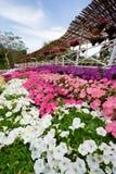 De tuin van de bloem Royalty-vrije Stock Afbeelding