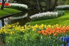 De tuin van de bloem in de lente stock afbeelding