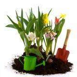 De tuin van de bloem in de lente Royalty-vrije Stock Fotografie