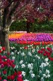 De tuin van de bloemtulp, tulpenfestival Royalty-vrije Stock Foto's