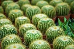 De tuin van de cactus Stock Fotografie
