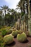 De Tuin van de cactus - Elche - Spanje Stock Foto's