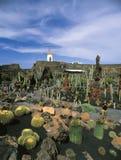 De tuin van de cactus in lanzarote stock foto