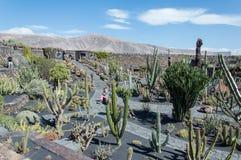 De Tuin van de cactus, Lanzarote, Spanje Royalty-vrije Stock Afbeeldingen