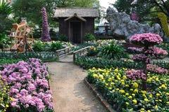 De tuin van de chrysant Stock Afbeelding