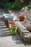 De tuin van de de lentepot Stock Foto