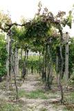 De tuin van de druif in Zuid-Moravië Royalty-vrije Stock Afbeeldingen