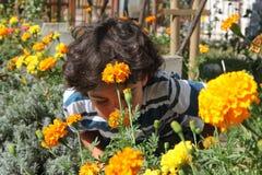 De tuin van de herfst Stock Fotografie
