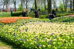 De tuin van de keukenhofbloem royalty-vrije stock afbeelding