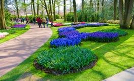 De tuin van de keukenhofbloem royalty-vrije stock afbeeldingen