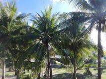 De tuin van de kokosnotenplaats Royalty-vrije Stock Afbeelding